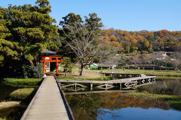 厳島湿生公園 2
