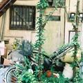 Photos: 緑