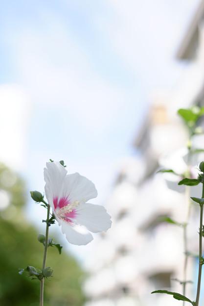 団地に咲く花