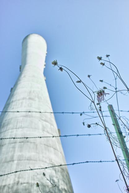 給水塔と枯花