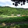 Photos: 河津オートキャンプ場036