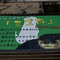 写真: katurahama110311002