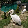 写真: northsafari110705002