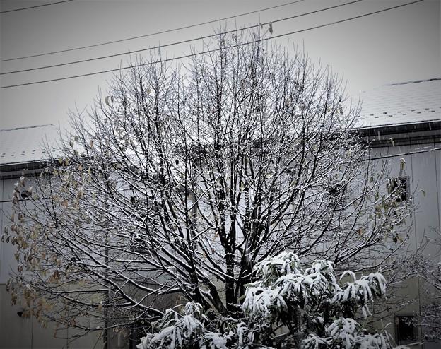 初雪・・・2 11/24