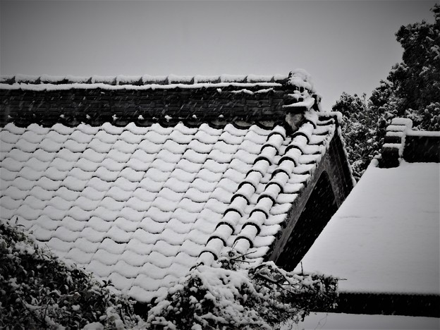初雪・・・3 11/24