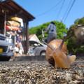 写真: カタツムリの一種