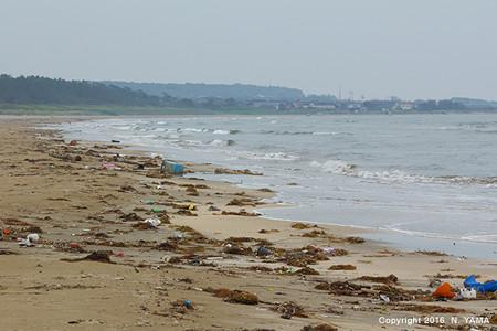 イカリモンハンミョウが生息する海岸