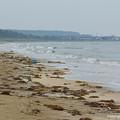 写真: イカリモンハンミョウが生息する海岸
