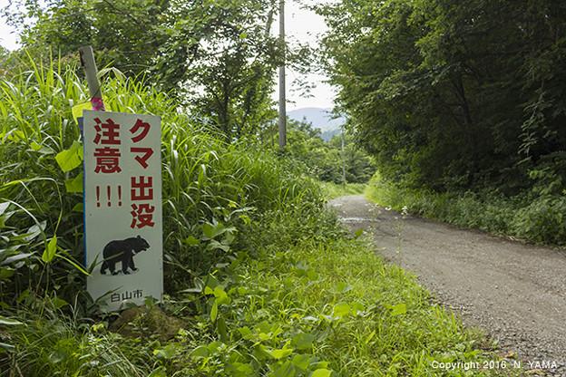 クマ出没注意看板