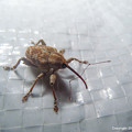 写真: yamanao999_insect2016_268