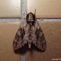 写真: yamanao999_insect2016_273