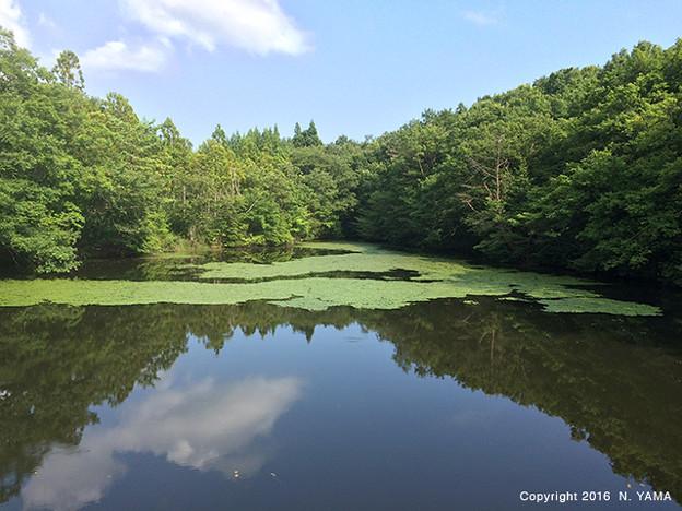 東谷内ため池