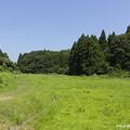 Photos: 休耕田風景