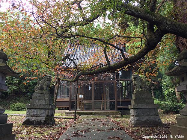 Photos: 桜町神社