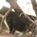 Photos: yamanao999_cats_101