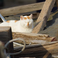 Photos: yamanao999_cats_102