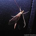 写真: yamanao999_insect2011_323