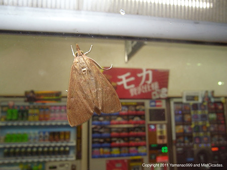yamanao999_insect2011_429