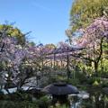 Photos: 平安神宮 西神苑