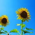 青空に太陽ふたつ