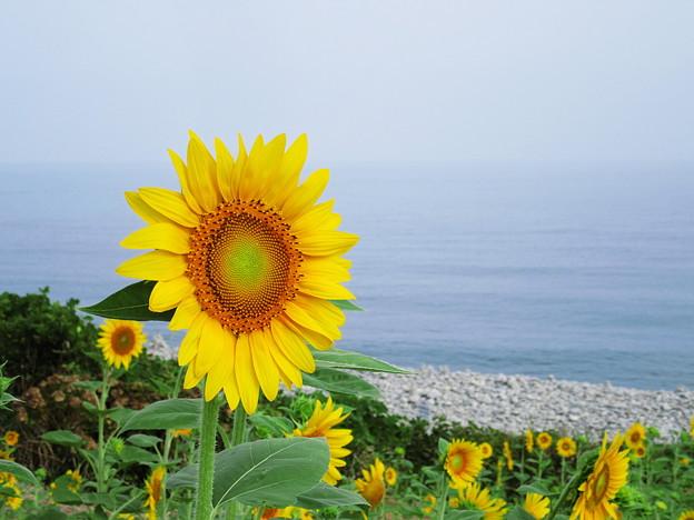 海・浜・向日葵