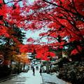 Photos: 金剛峯寺2