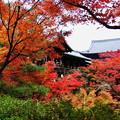 Photos: 東福寺 紅葉3