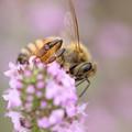 美味しそうな花の蜜