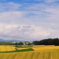 写真: 風薫る丘