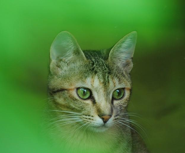 写真: Green-Eyes