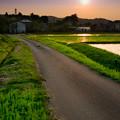 写真: 田舎道