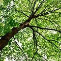 写真: 新緑を見上げる4
