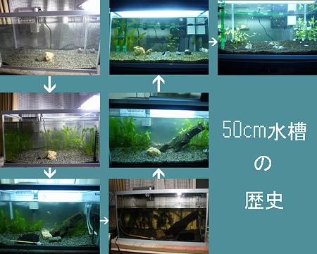 50cm水槽の歴史