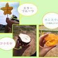 写真: 春の沖縄本島2010@おやつ