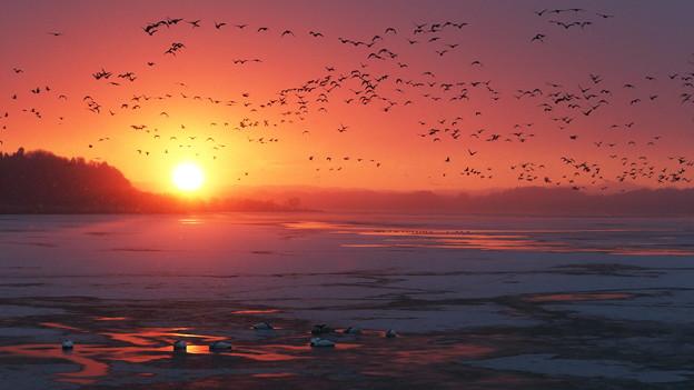 写真: 雪の飛翔