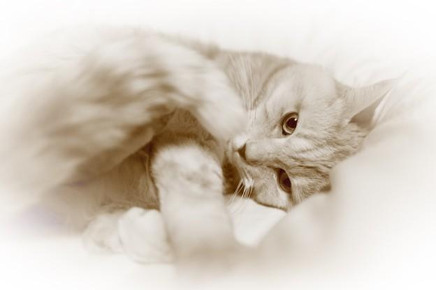 Ennui cat