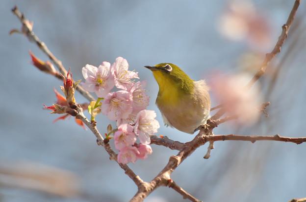 Photos: 春に向かってGO!