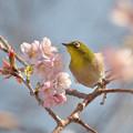 春に向かってGO!