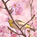 ようこそ、桜の世界へ!