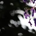 写真: 光と影