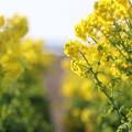 写真: 黄色の抜け道