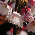 1346 花弁