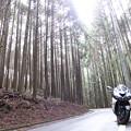 Photos: IMG_9022 杉木立