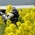 Photos: IMG_9080 菜の花越しに