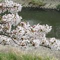 IMG_9132 H27桜