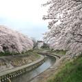 IMG_9136 H27桜