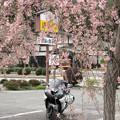 Photos: IMG_9211 遠山郷しだれ桜