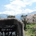 Photos: IMG_9267 木曽駒高原