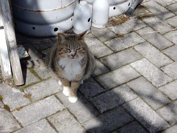 写真: DSCN1349 出没作手猫