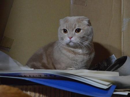 2015年02月19日のスコちゃん(2歳)